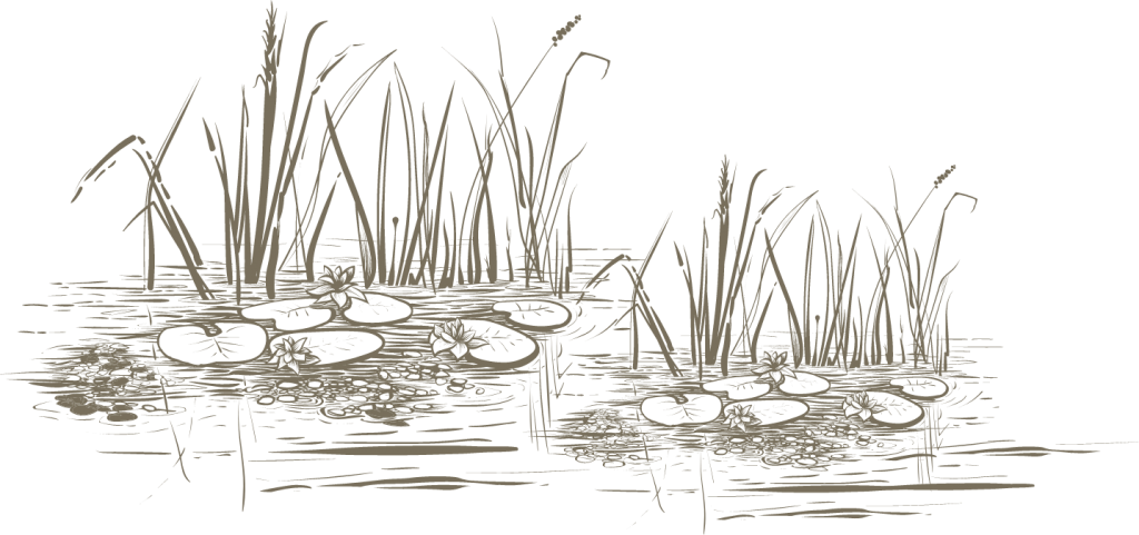 Wetland habitat sketch